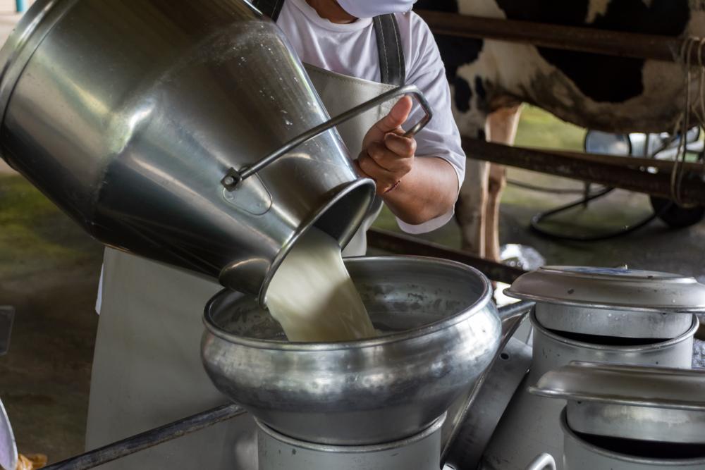 Produktivitas susu sapi perah meningkat