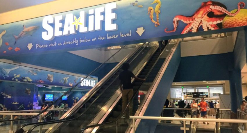 The best things to do in the Twin Cities with kids | Sea Life Aquarium | Mall of America | Minneapolis, MN (USA)