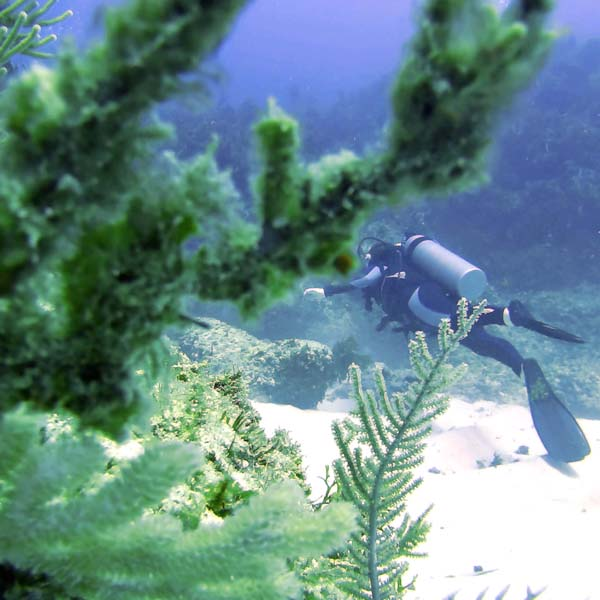 Scuba Diving In Punta Cana - The Good, Bad and Annoying