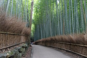 The Arashiyama Bamboo Grove