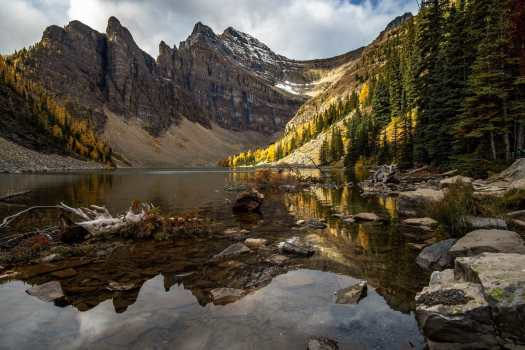 Larches at Lake Agnes