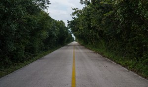 Trees on the western cozumel bike path
