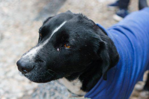 Street dog of Calle Jaen in La PAz