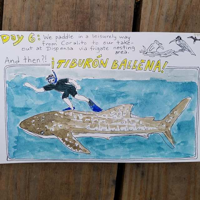 Baja whale shark