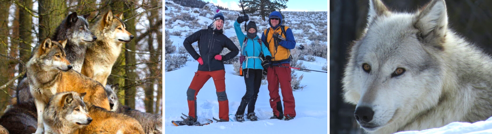 Yellowstone Wolf Adventure