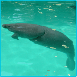 Miami - Manatee Rescue