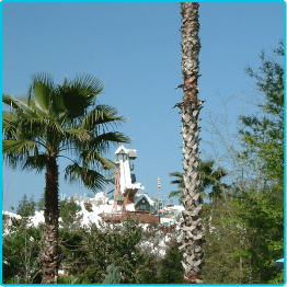 Disney World - Wasserpark