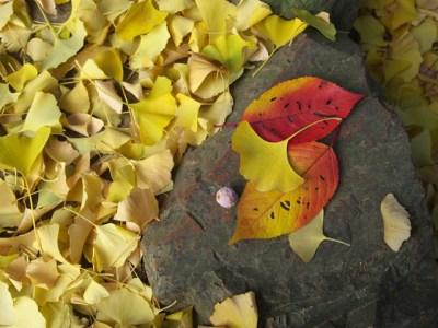 秋の落ち葉の風景