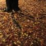 秋の公園の落葉