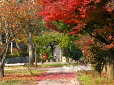 秋の紅葉と公園樹林
