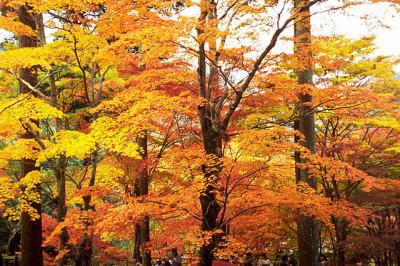 秋の紅葉、素敵な森林