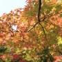 秋の紅葉と秋の息吹