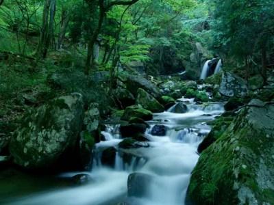 癒しの渓流
