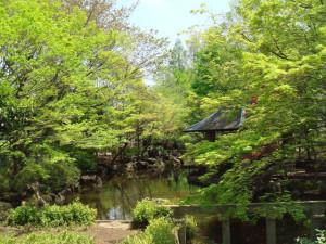 初夏の緑の庭園