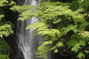 初夏の滝と緑の木々