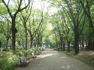 初夏のト公園と木のある散歩道