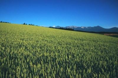 初夏の高原と麦畑