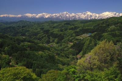 夏の樹海と日本アルプス山脈