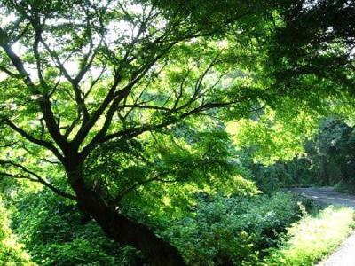 夏の山道と緑の木々