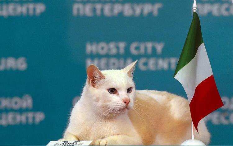 Euro 2020, Achille: il gatto che ha indovinato la vittoria dell'Italia