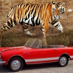 Cars with Animal Names
