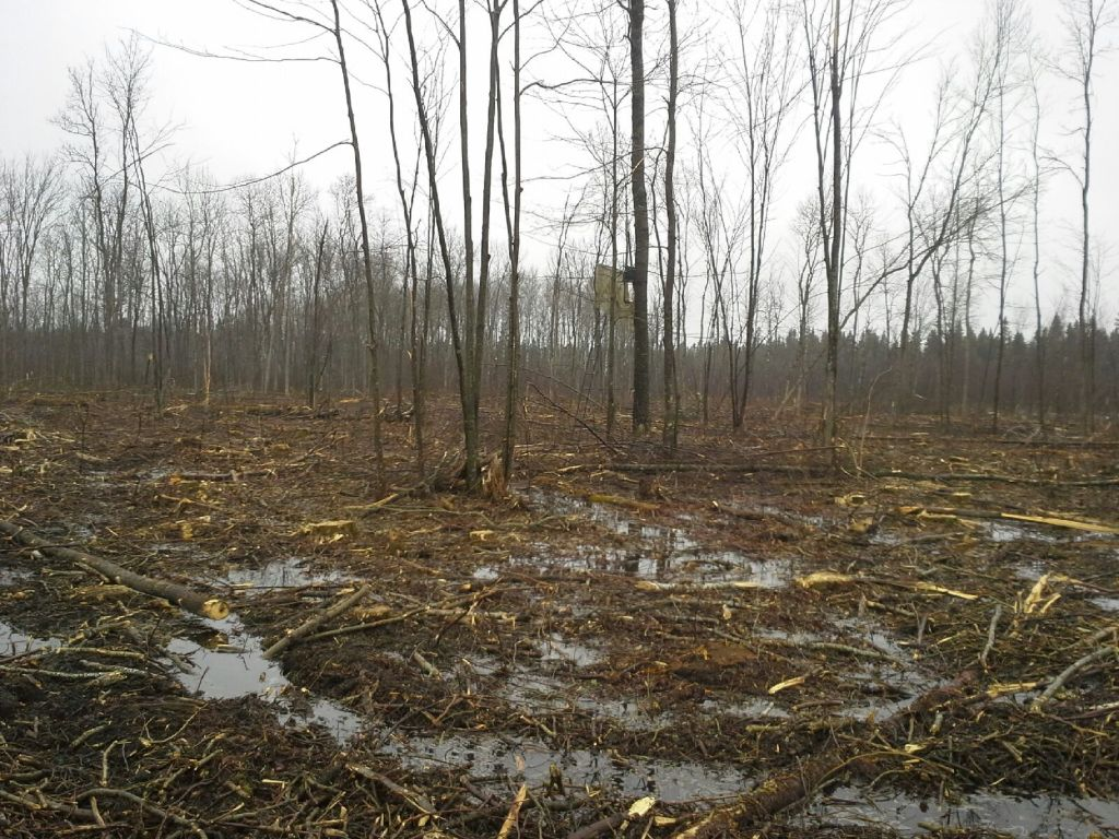 forestry clearcut