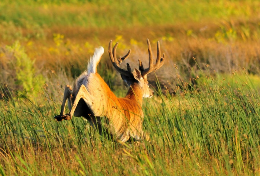 Hunting Scent Control   Podcast Review