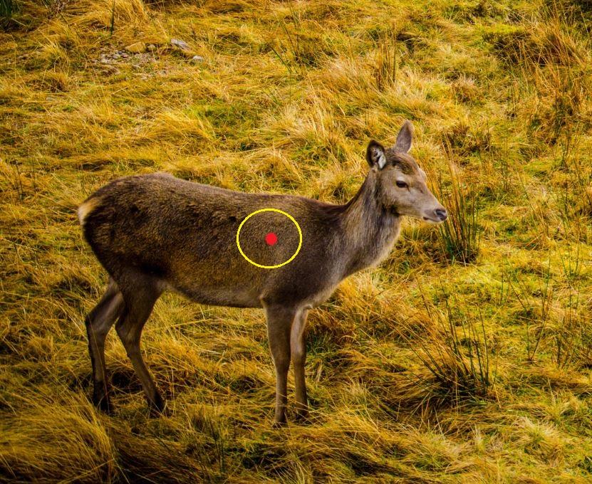 bow hunting shot