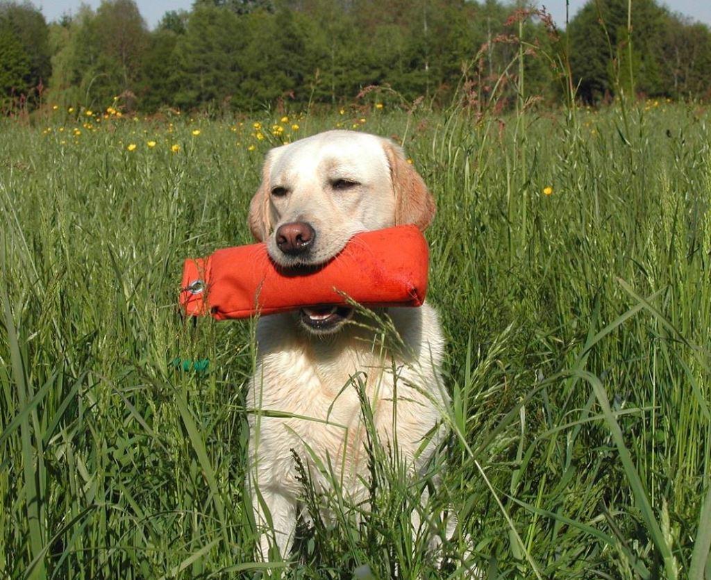 train a hunting dog