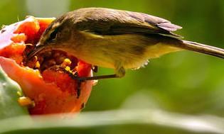 gardenpests-birds-885