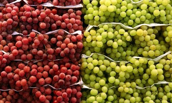 Grapes on shelves 883145LR