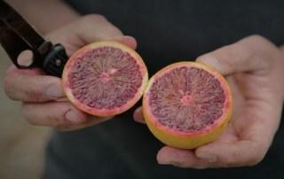 Aus blood oranges