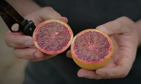 Tapping into the health benefits of blood oranges