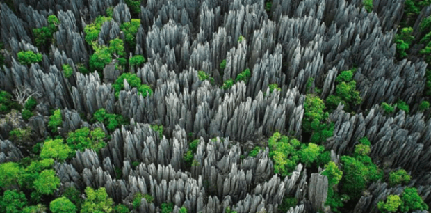 Tsingy the stone knife Forest Madagascar