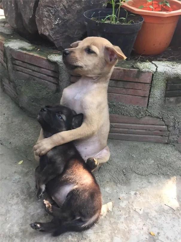 adopted-dogs-cuddle-buddhist-nuns-china-6