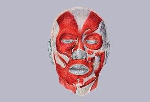 anatomija / mercedes bratoš