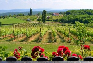 cesta ruža i vina, pleternica - 2020