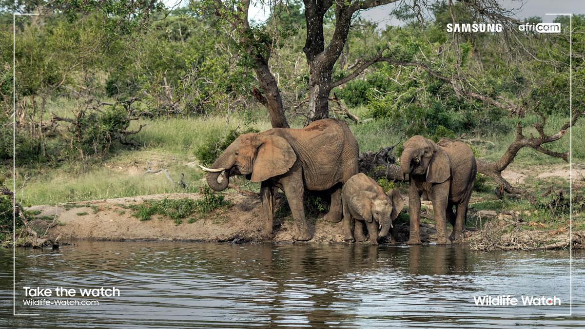 elephant - wildlife watch africa - 2021.