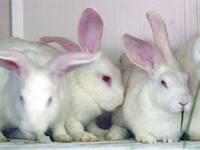 кролик жив