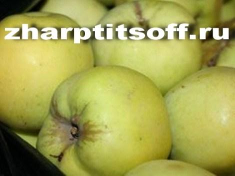 Фарш яблочный. Начиняем гуся или утку перед запеканием.