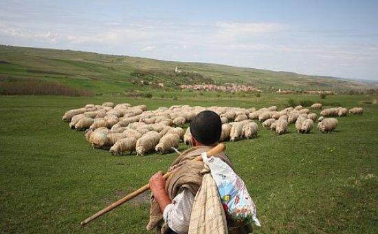 cioban ocnamuresonline