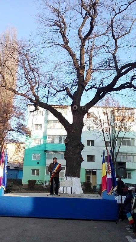 Ziua Unirii, sărbătorită la stejarul secular