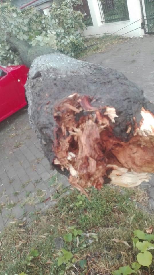 Furtuna de joi a distrus 8 autoturisme. Sute de copaci au fost parțial sau total doborâți de vânt
