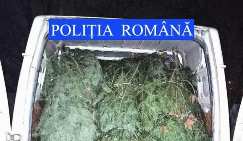 Bărbat din Roman prins de polițiști cu pomi de Crăciun fără documente