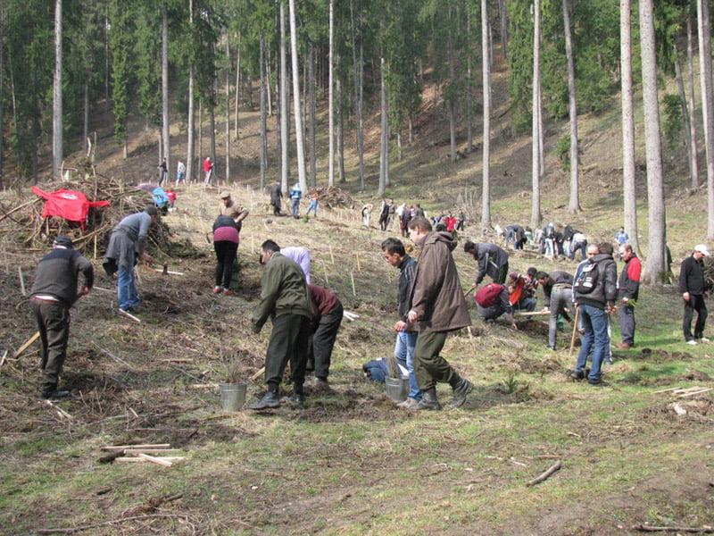 """Direcția Silvică Neamț începe acțiunile din cadrul """"Lunii plantării arborilor"""""""