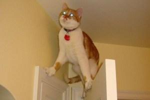 pisica_1