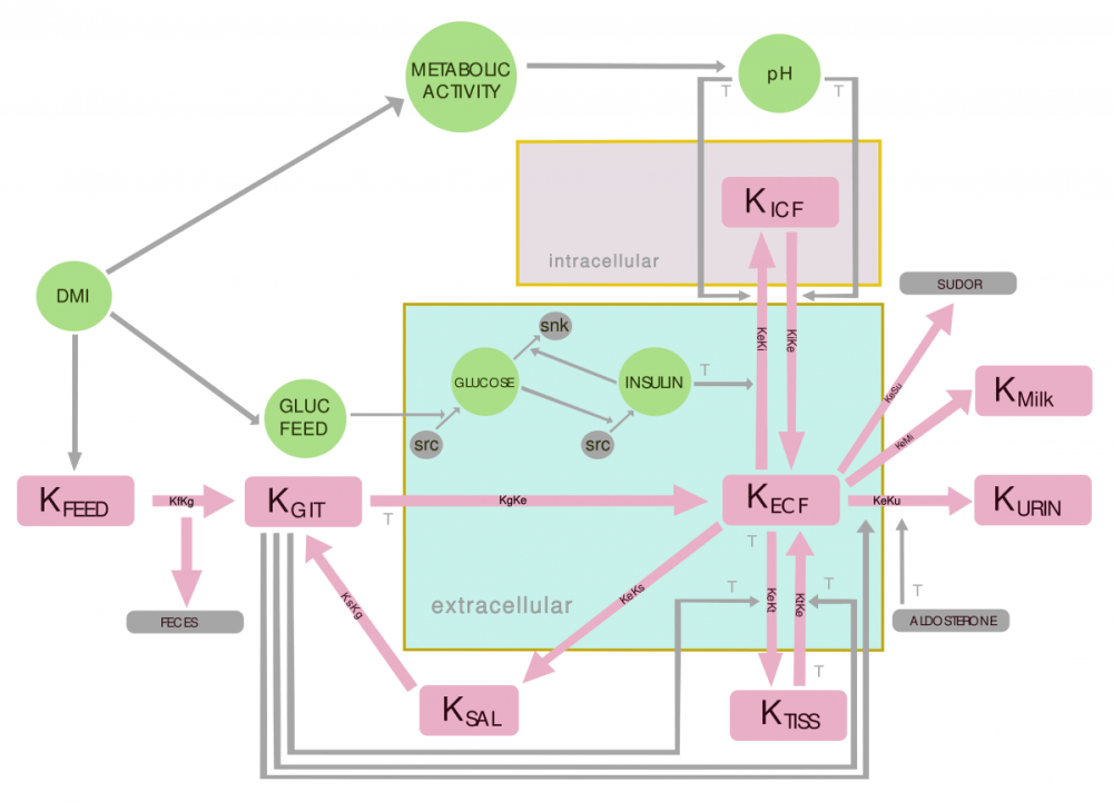 medium resolution of flowchart for the potassium balance model in the bovine