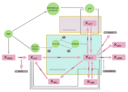 small resolution of flowchart for the potassium balance model in the bovine