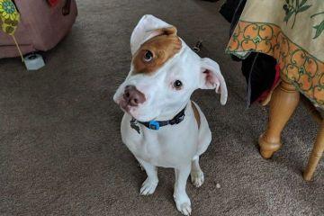 Dopo essere stato abbandonato per ben cinque  volte, questo cucciolo sordo ha finalmente trovato una casa e una famiglia accogliente e ora sta imparando il linguaggio dei segni.