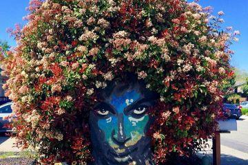 Attorno a un murale del cantante Prince cresce  una magnifica vegetazione a mo' di capigliatura e la cosa non passa certo inosservata.